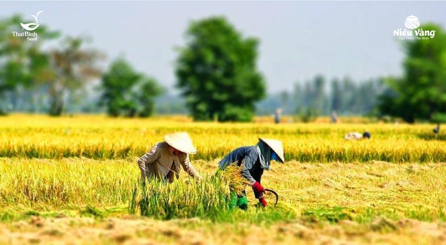Tìm hiểu về nền văn minh lúa nước lâu đời của dân tộc Việt Nam – Phần 1 tin-tuc