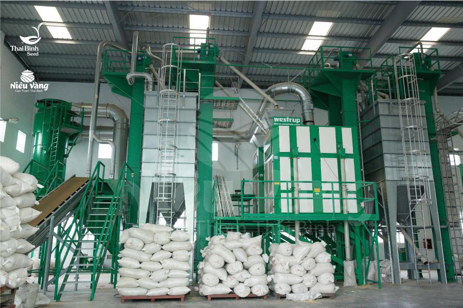 Gần 50 năm gìn giữ những giống lúa quý cho gạo Việt tin-tuc