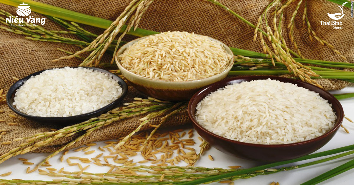 Gần nửa thế kỷ ấp ủ một giống gạo sạch và quý – Niêu Vàng! tin-tuc