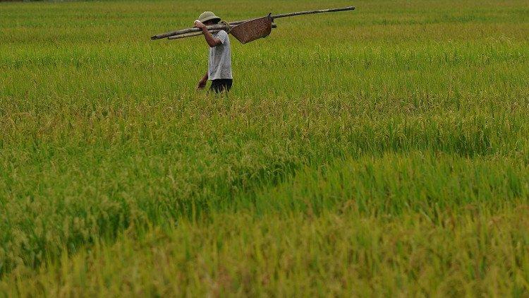 Tìm hiểu về nền văn minh lúa nước lâu đời của dân tộc Việt Nam – Phần 2 tin-tuc