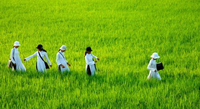 Tìm hiểu về nền văn minh lúa nước lâu đời của dân tộc Việt Nam – Phần 3 tin-tuc