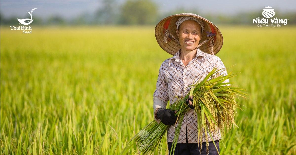 Gần nửa thế kỷ ấp ủ một giống gạo quý – Niêu vàng tin-tuc
