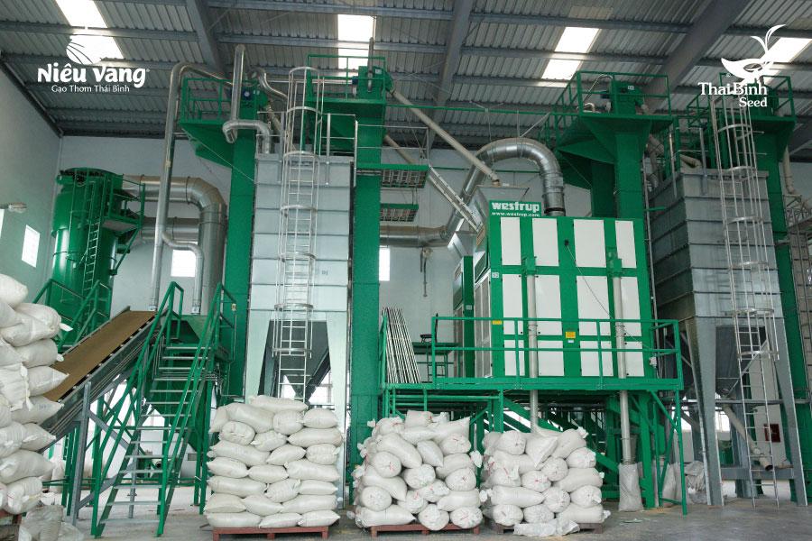 Bạn có chắc mình mua được gạo sạch nguyên chất thật sự hay không? tin-tuc