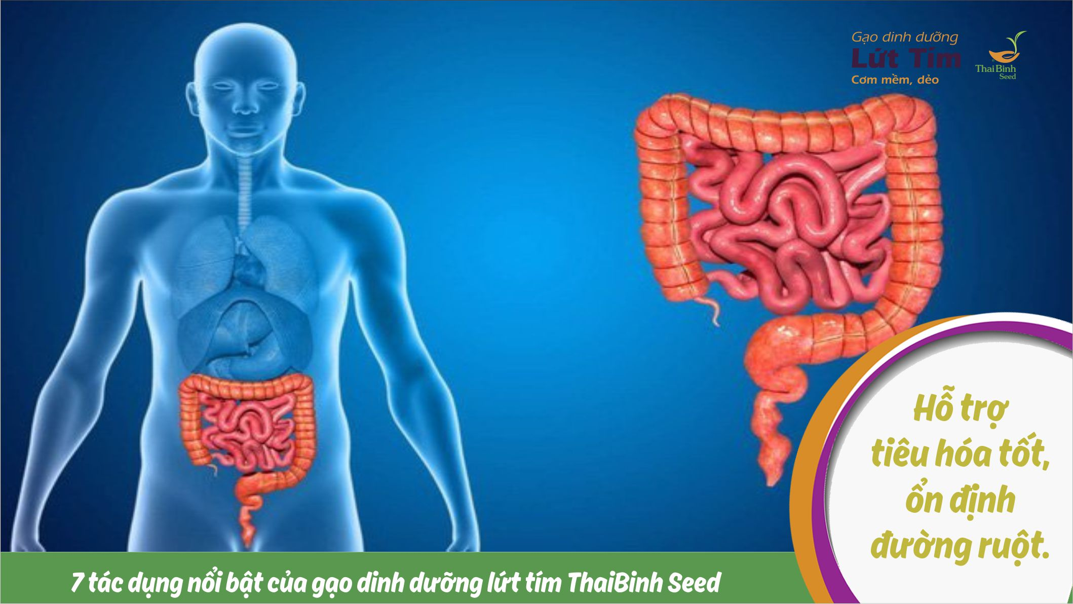 7 tác dụng nổi bật của gạo lứt tím ThaiBinh Seed tin-tuc