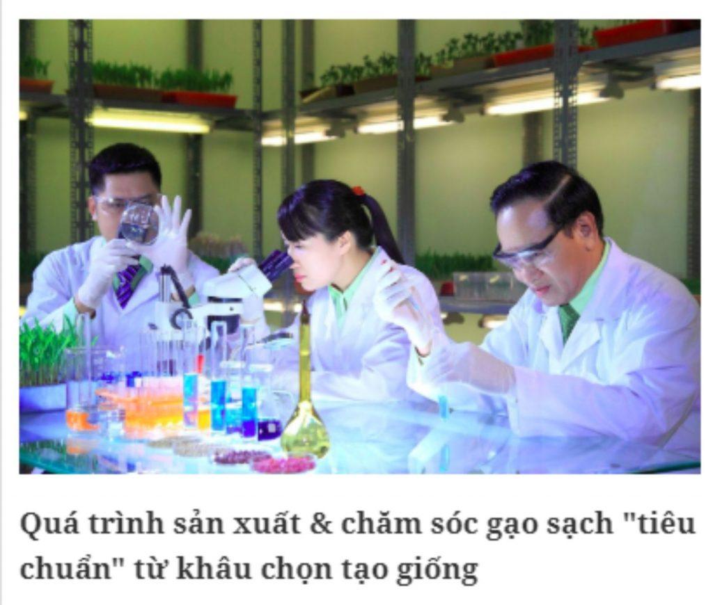 Gạo niêu vàng: Gạo sạch nguyên chất từ phòng thí nghiệm tới bàn ăn ( Báo Sức khoẻ đời sống) bao-chi-noi-ve-nieu-vang
